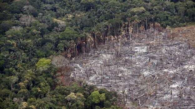 La justice colombienne ordonne des mesures de protection de l'Amazonie