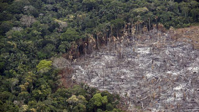 Une parcelle victime de déforestation dans le Parc national de Tinigua, en Colombie, le 22 février 2020. [Mauricio Duenas Castaneda - Keystone/epa]