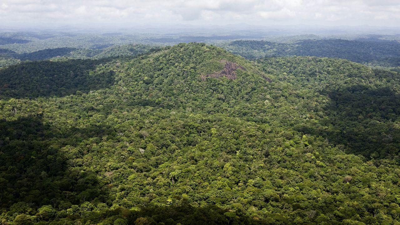 Vue aérienne de la forêt amazonienne guyanaise. JODY AMIET AFP [Jody Amiet - AFP]