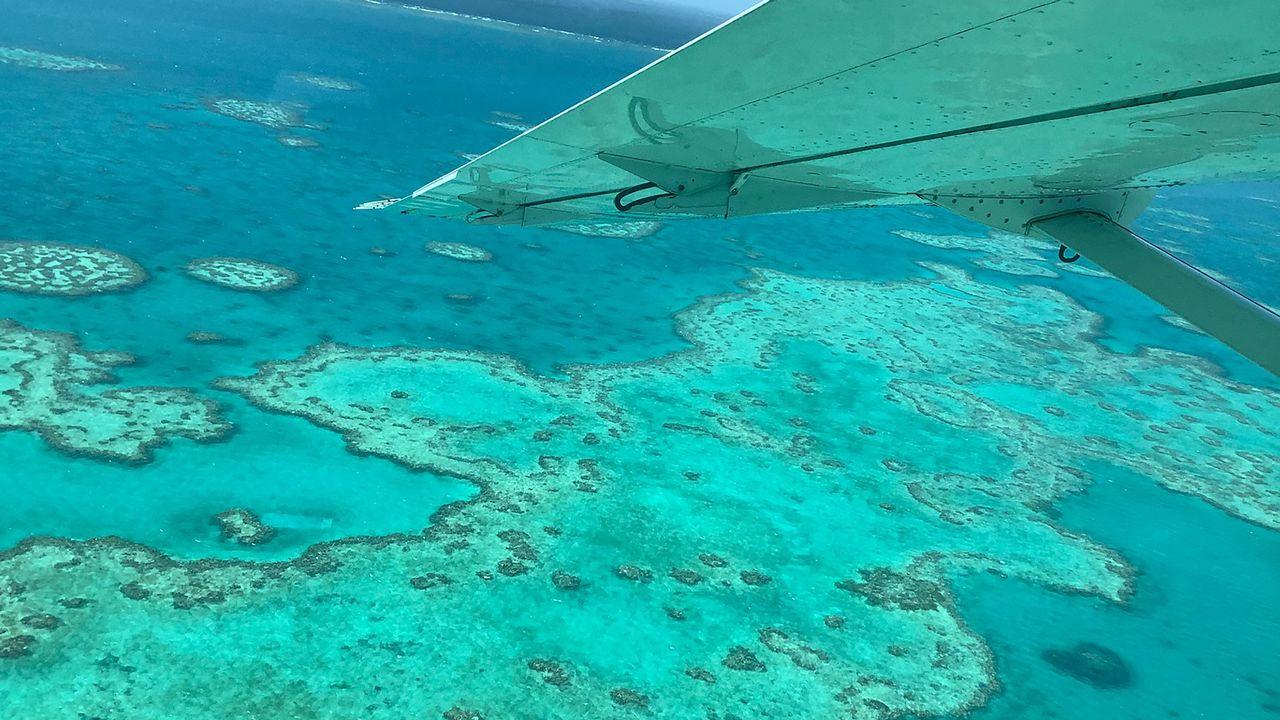 La Grande Barrière de corail australienne a connu son pire épisode de blanchissement. [JAMES COOK UNIVERSITY - AFP PHOTO / JAMES COOK UNIVERSITY]