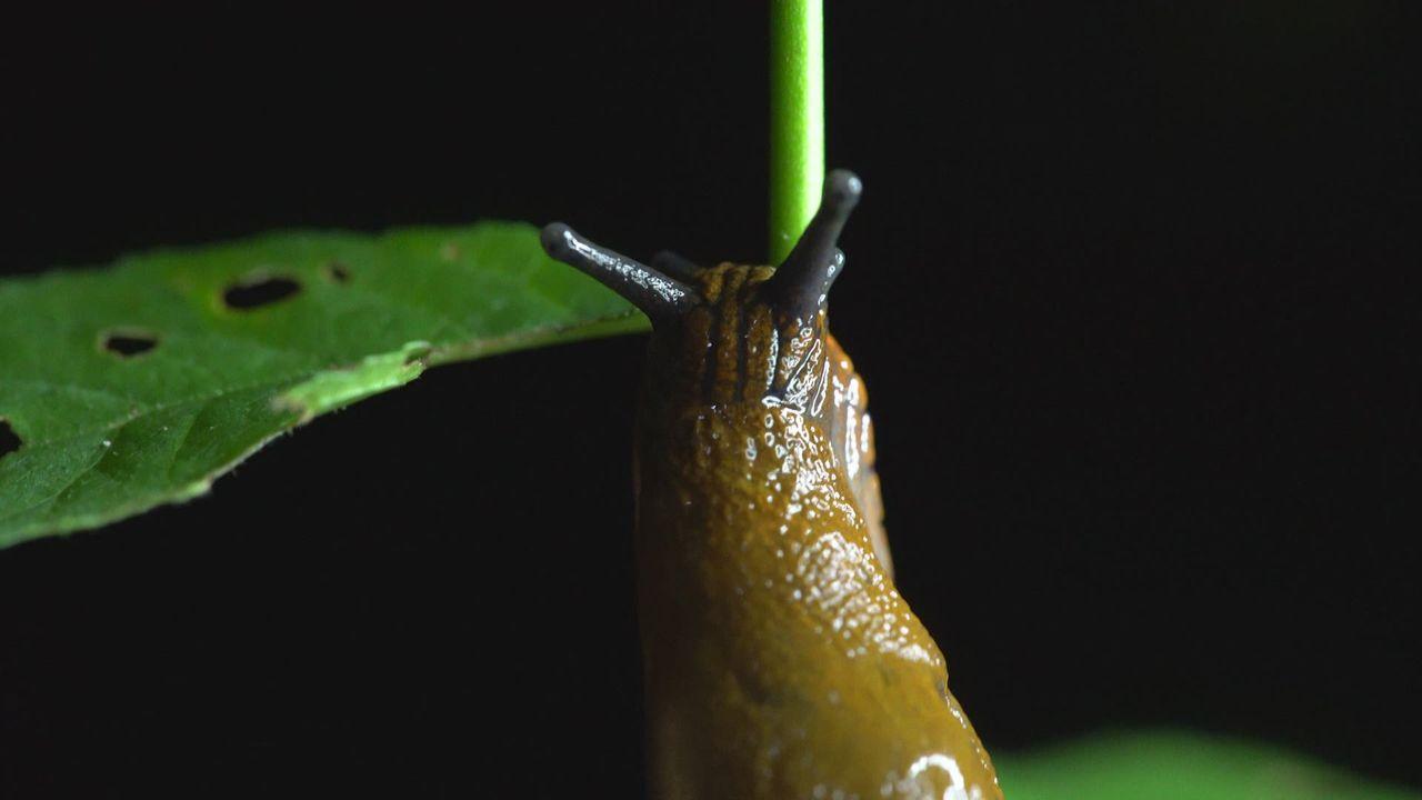 Escargots et limaces [RTS]
