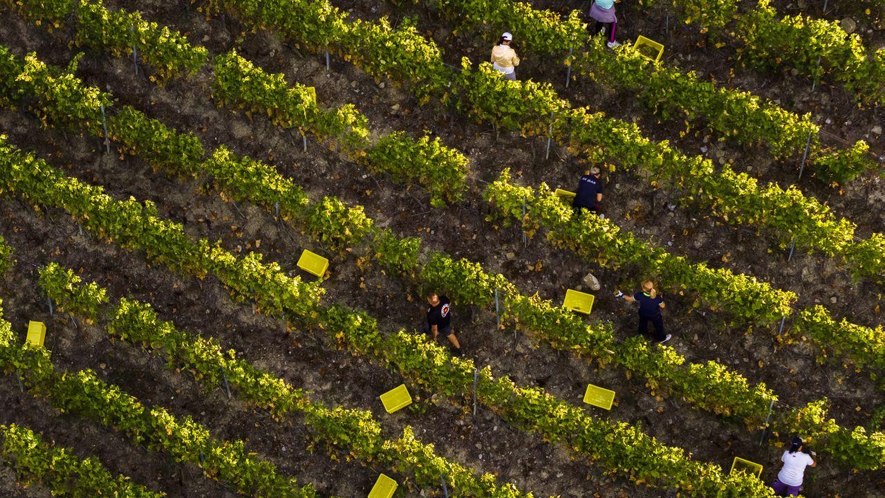 Près de 200 Portugais sont attendus  à Genève pour la saison des effeuilles (Image prétexte). [Valentin Flauraud - Keystone]