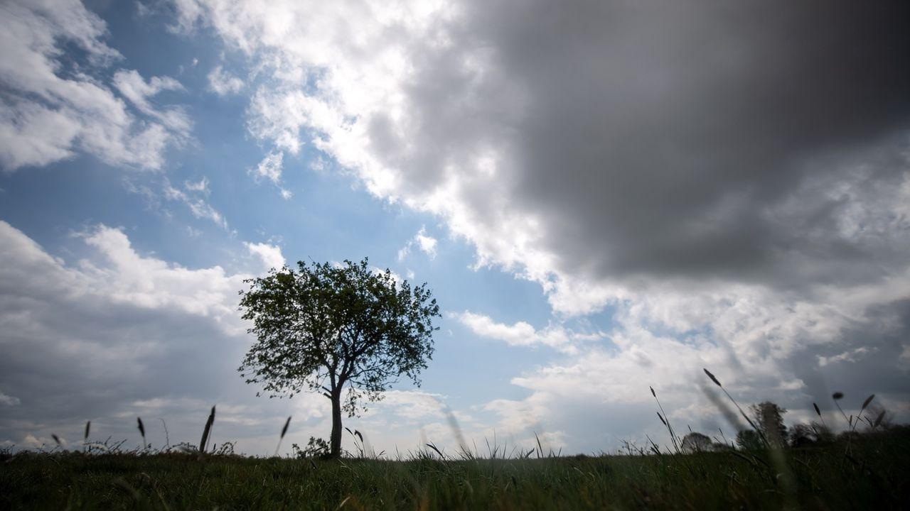 Un arbre solitaire (image d'illustration). [DPA/Sina Schuldt - Keystone]
