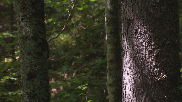 Les arbres [RTS]
