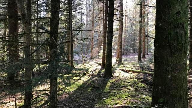 Forêt suisse [chamade.ch - DR]