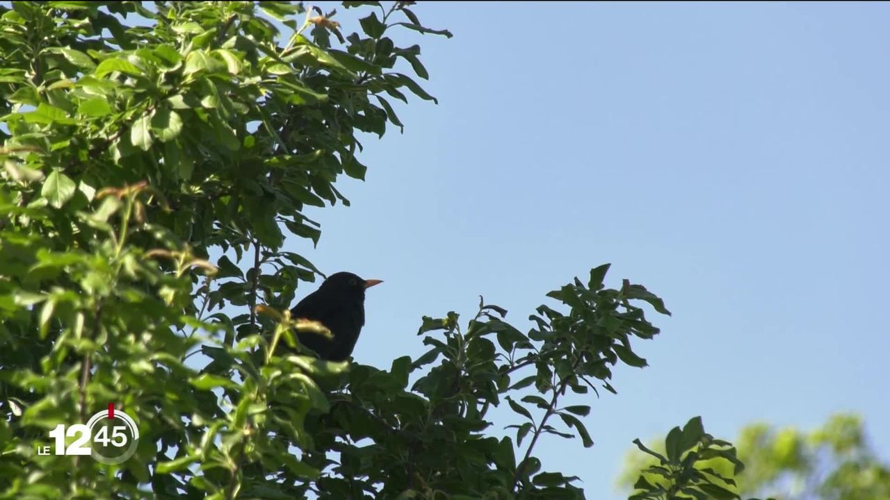 """Un grand recensement des oiseaux a été mis sur pied par l'association """"Birdlife"""". [RTS]"""