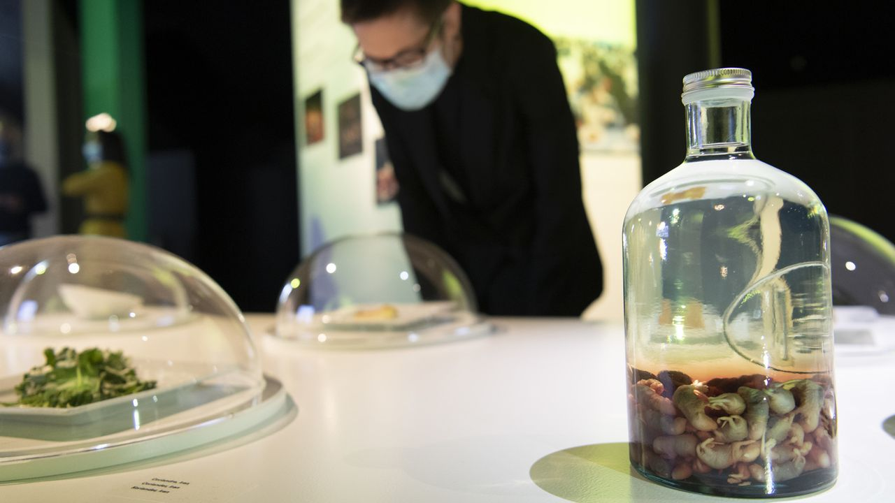 """Du vin de souris de Corée du Sud exposé à l'Alimentarium dans le cadre de l'exposition """"The food we love to hate"""". [Laurent Gillieron - Keystone]"""