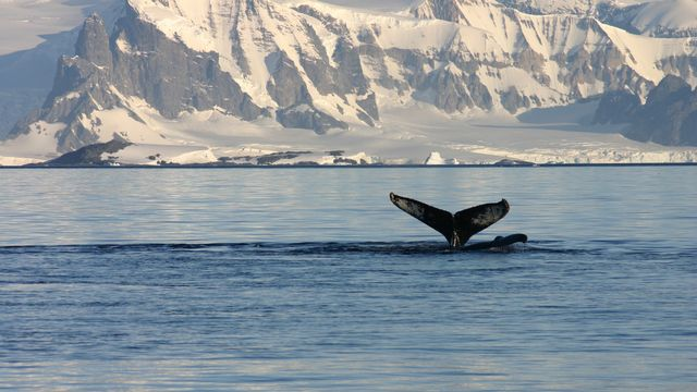 Face au réchauffement climatique, les espèces marines sont plus promptes à se déplacer vers le frais que les espèces terrestres.  AchimHB Depositphotos [AchimHB - Depositphotos]