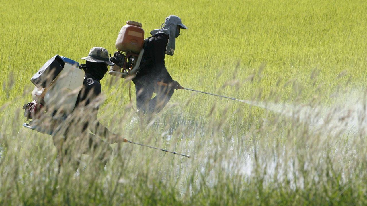 Public Eye dénonce la présence de pesticides interdits dans nos assiettes. [Barbara Walton - EPA/Keystone]