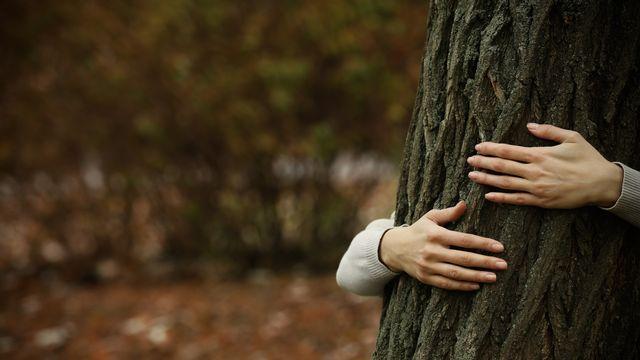 Lʹêtre humain cohabite depuis des millénaires avec la nature et les arbres. [belchonock - Depositphotos]