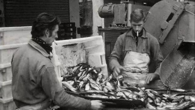 Des ouvriers de la pêche industrielle au travail. [RTS]