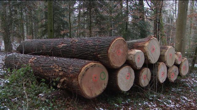 Les forêts sont peu rentables en raison de la baisse du prix du bois. [RTS]