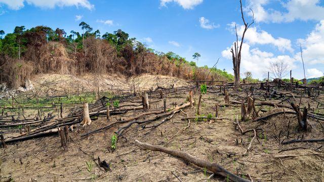 Le grand débat - Déforestation, l'autre épidémie ? [Fazon  - Fotolia]