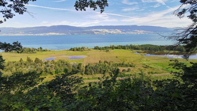 La Grande Cariçaie est une réserve naturelle lacustre qui se trouve sur la rive sud du lac de Neuchâtel. Jérôme Zimmermann  RTS [Jérôme Zimmermann - RTS]