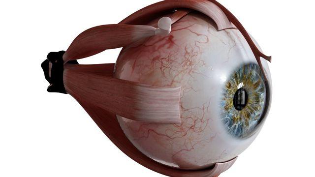 La nouvelle technique développée à Lausanne permet d'imager l'oeil pendant qu'il se déplace (image d'illustration) [Sebastian Kaulitzki - APF]