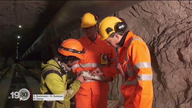 JU: Le projet de géothermie profonde dans la commune de Haute-Sorne cristallise les tensions [RTS]