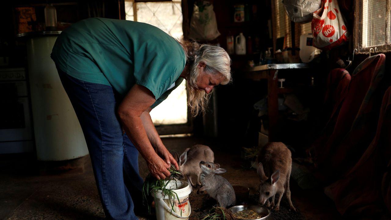 Des kangourous orphelins sont recueillis dans nord-est de la Nouvelle-Galles du Sud, au Australie, le 27 janvier 2020. [Jorge Silva - Reuters]