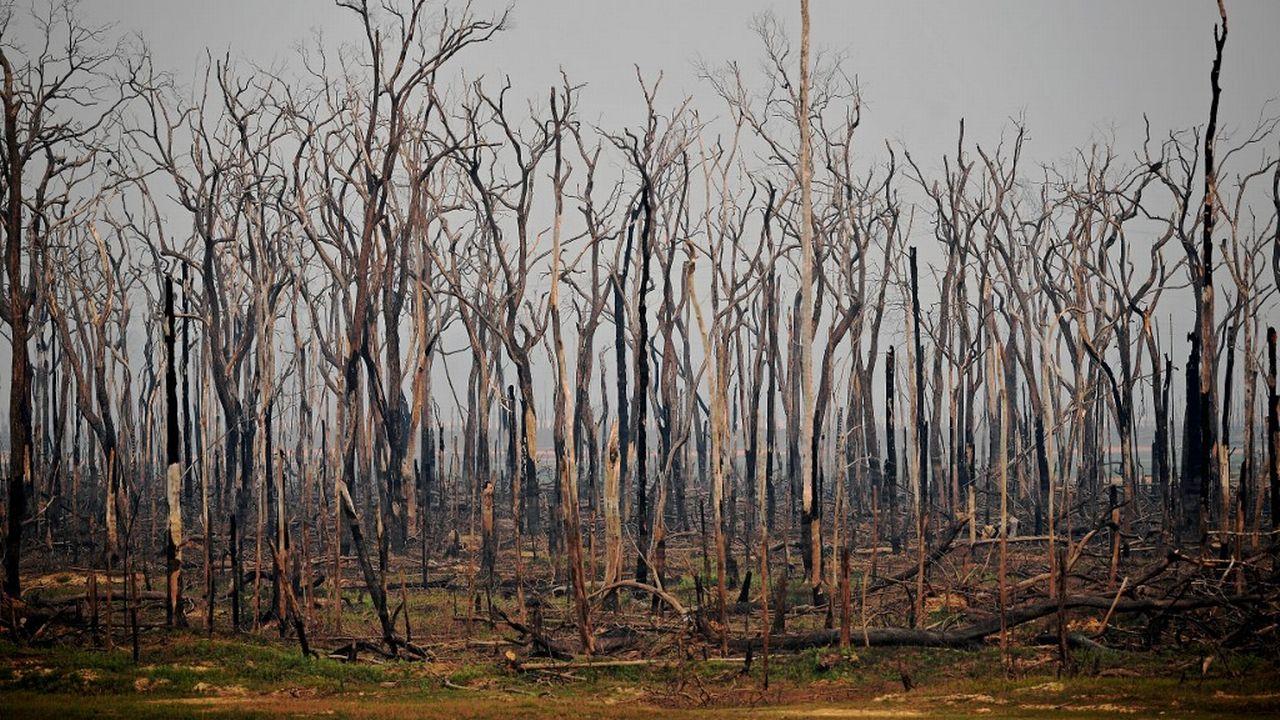 Des arbres carbonisés dans la forêt amazonienne (image d'archives). [Carl De Souza - AFP]