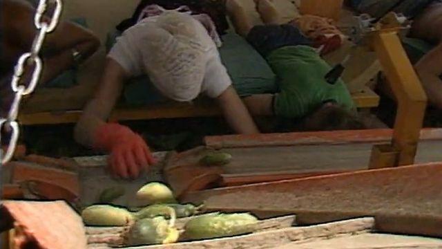 La récolte des cornichons, un exercice acrobatique! [RTS]
