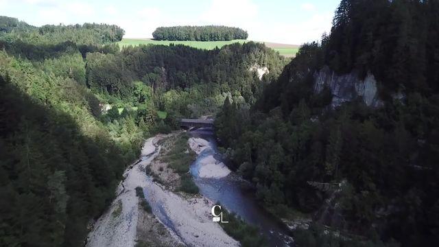 La Singine, l'une des dernières rivières sauvages du plateau [RTS]