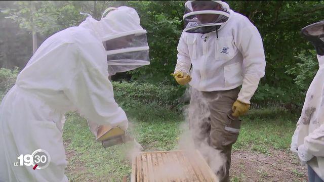 Devenir parrain d'une ruche pour aider à protéger la biodiversité [RTS]
