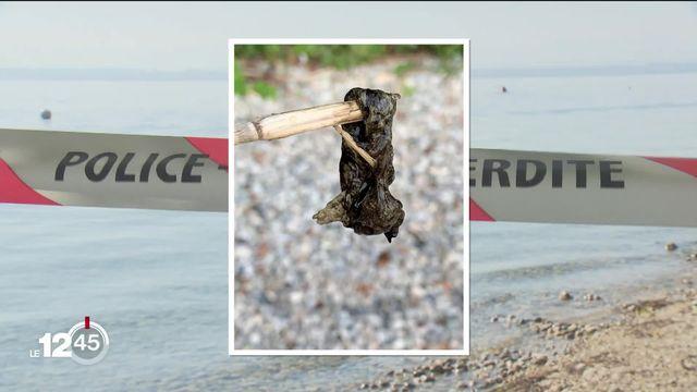 Fermeture préventive de plages du littoral neuchâtelois suite à des suspicions de contamination par des cyanobactéries [RTS]
