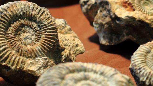 Le dossier sur les fossiles de RTS Découverte. [© jonnysek - Fotolia]