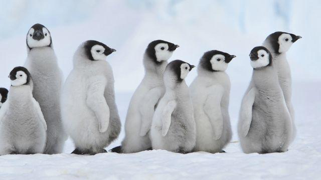 Le dossier sur l'Antarctique de RTS Découverte. [Silver - Fotolia]
