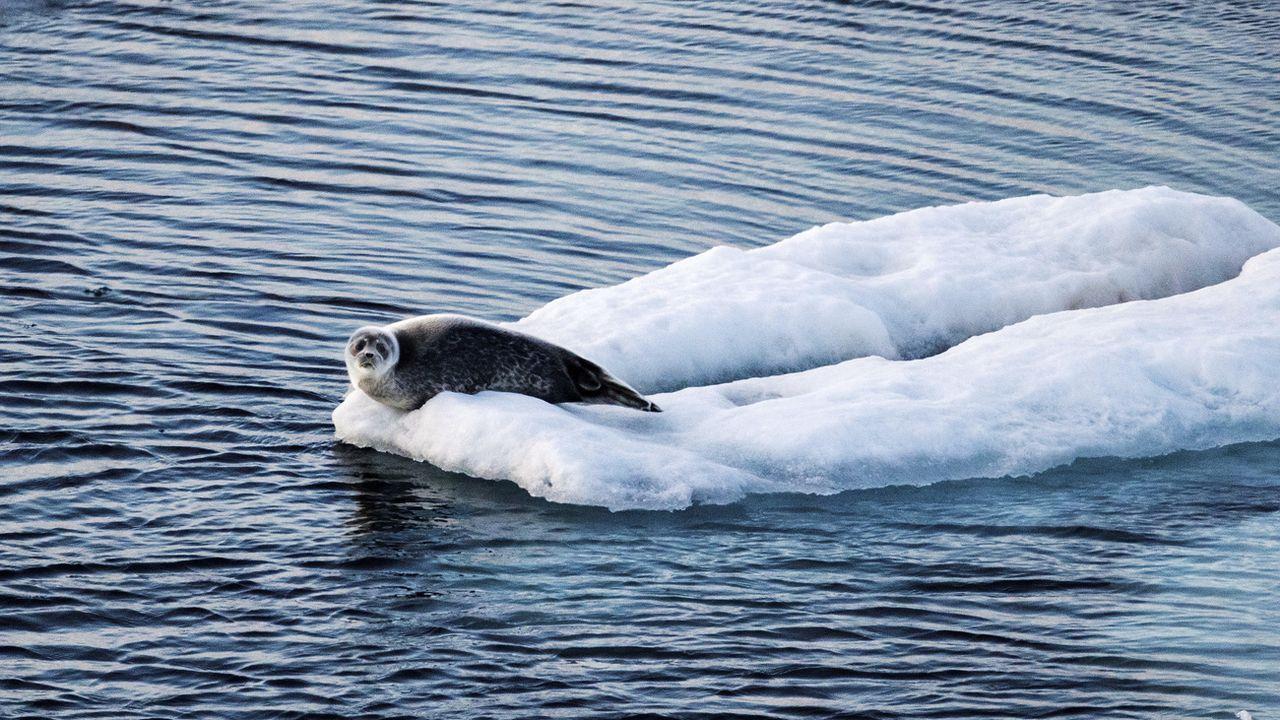 La nouvelle étude montre que le rythme de la hausse des températures dans l'Arctique est plus soutenu. [David Goldman - AP/Keystone]