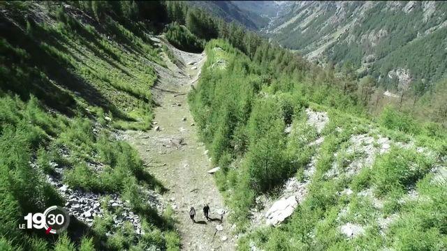Des chercheurs planchent sur l'importance des forêts dans la prévention des chutes de pierres en montagne [RTS]
