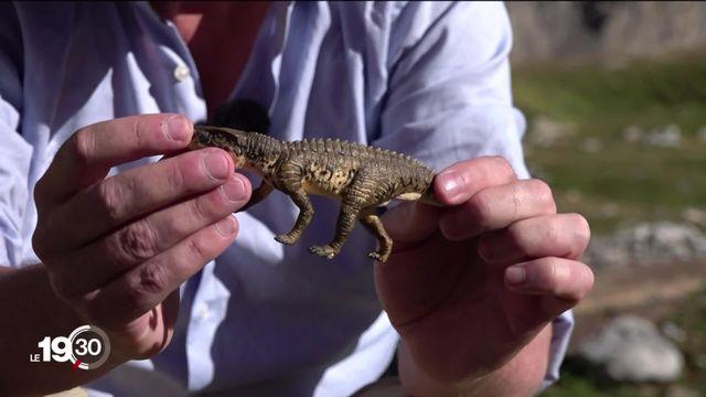 Deux paléontologues à la recherche de traces de reptiles primitifs, les archosaures. [RTS]