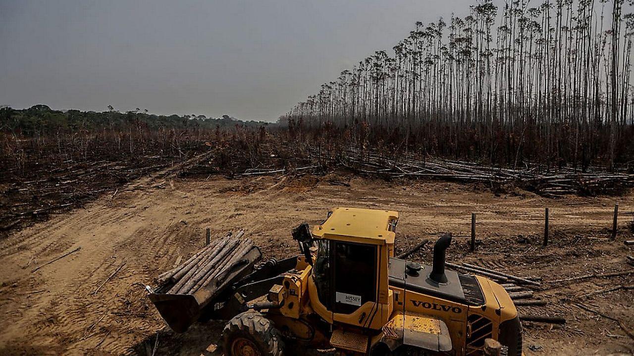 Les forêts tropicales attirent toujours plus d'investisseurs, selon des ONG
