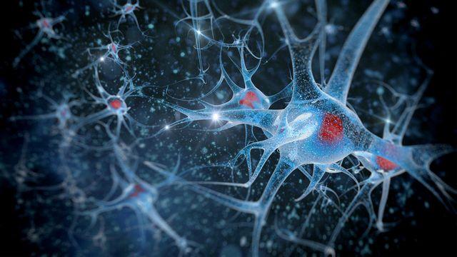 """L'ADN """"sauteur"""" régule des neurones humains. vitstudio Depositphotos [vitstudio - Depositphotos]"""