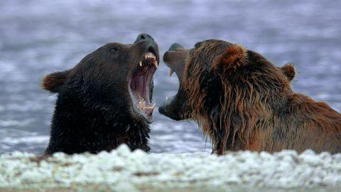 Nature sauvage de Russie