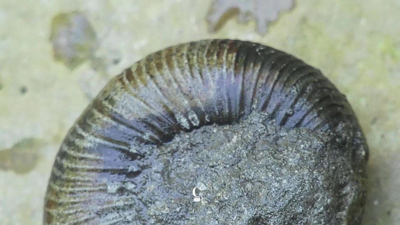 Des fossiles vieux de 160 millions d'années [RTS]