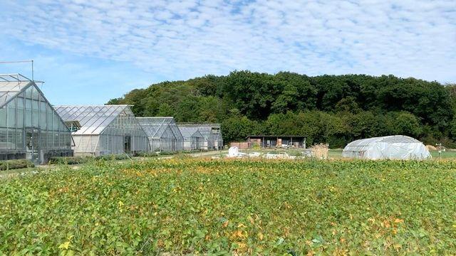 Les serres de l'Agroscope de Changins (VD). [Mathieu Henderson - RTS]