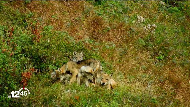 Votations du 27 septembre: la loi sur la chasse et la déduction fiscale sur les frais de garde pourraient être rejetées [RTS]
