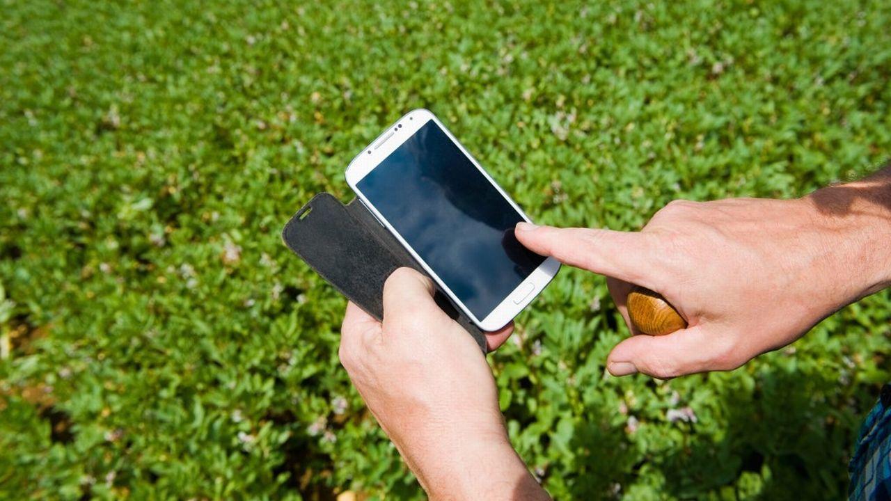 Les portables pourraient jouer un rôle dans la mortalité des insectes. [Henry Arden - AFP]