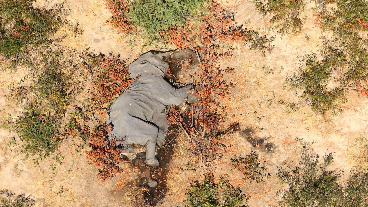 Des centaines d'éléphants tués par une bactérie, au Botswana [AFP]