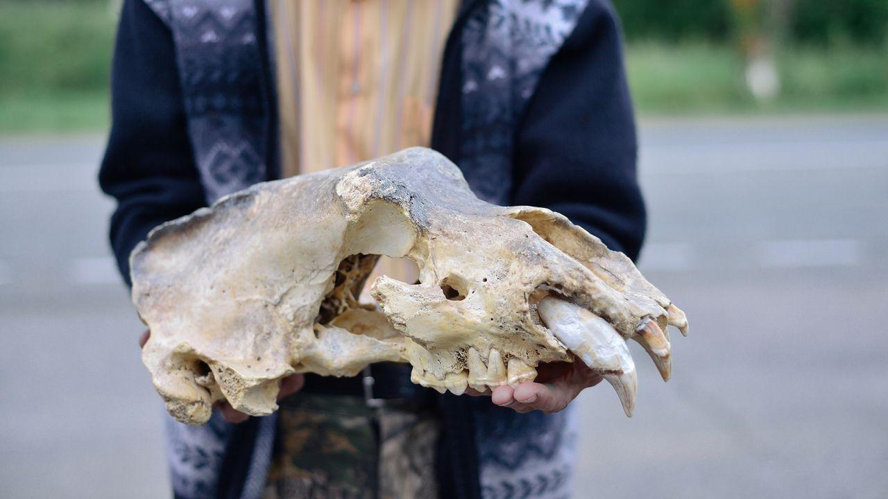 L'humain pourrait être à l'origine de la disparition de l'ours des cavernes. druii Depositphotos [druii - Depositphotos]