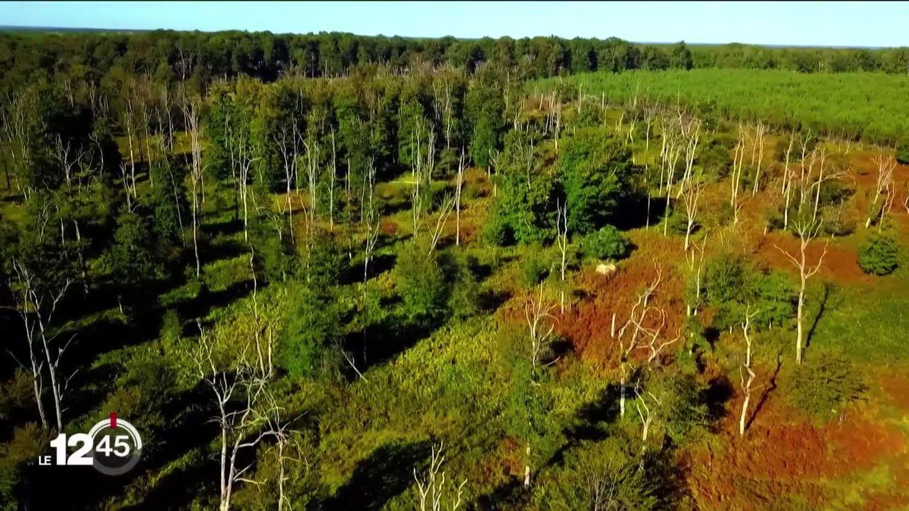 Changements climatiques: la forêt du futur testée au sud de Paris. [RTS]