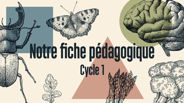 Fiche pédagogique RTS Découverte Cycle 1. [Florian Tranchet - RTS]