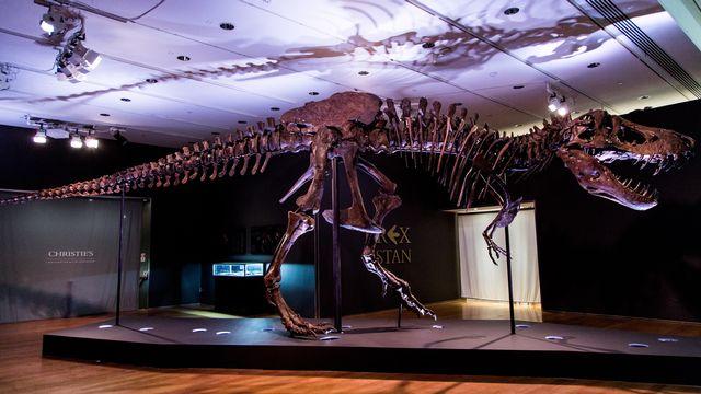 """Les squelettes de dinosaures tels que """"Stan"""" s'arrachent à prix d'or aux enchères. [Alba Vigaray - EPA]"""