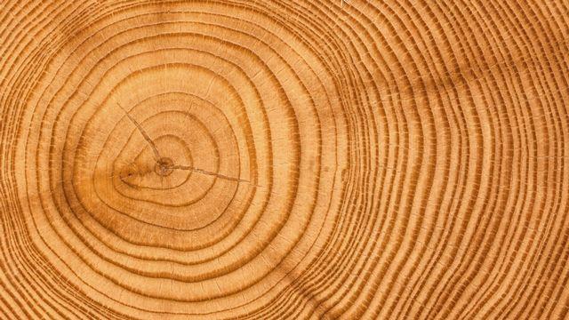 La dendrochronologie remonte l'histoire par la lecture des cernes du bois. vicnt2815 Depositphotos [vicnt2815 - Depositphotos]