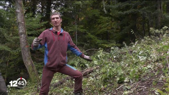 VD: Des bénévoles de la fondation Bergwaldprojekt s'activent au chevet de la forêt de montagne [RTS]