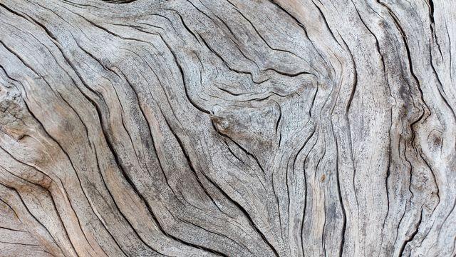 Texture d'un morceau de bois. [foto76 - Depositphotos]