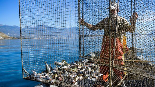 Pêche à l'aide d'une nasse dans le Léman, au large de Rivaz. [Jean-Christophe Bott - Keystone]