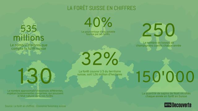 Infographie sur la forêt suisse. [Piktochart / RTS Découverte]