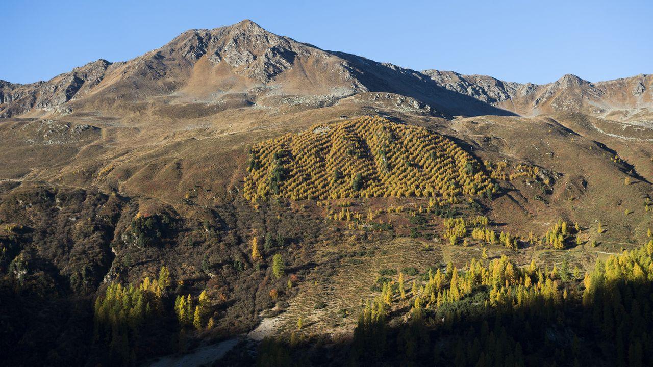 Une forêt-test gérée par le WSL au-dessus de Davos (image d'illustration). [Gian Ehrenzeller - Keystone]