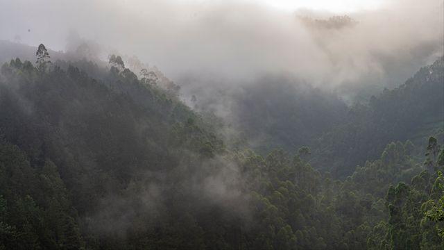 Une étude pour savoir quel type de forêt pour mieux stocker le CO2. [Sylvain Cordier - AFP]